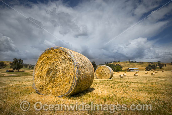 Field dotted with hay bales. Country New South Wales, near Coolac, Australia. Photo - Gary Bell