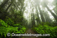 Rainforest track in mist photo