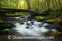 Rainforest Cascade New England Photo - Gary Bell