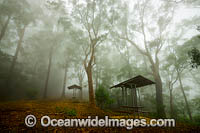Forest and picnic table in mist Photo - Gary Bell