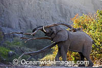 African Elephant Namibia photo