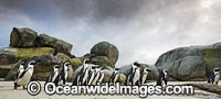 African Penguins Cape Town Photo - Chris and Monique Fallows