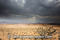 Namib Desert Photo - Chris and Monique Fallows