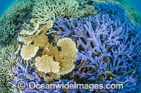 Great Barrier Reef Coral stock photo