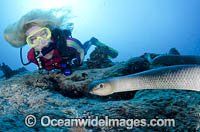 Scuba Diver with Sea Snake Photo - Bob Halstead