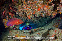 Scuba Diver with Coral Grouper Photo - Bob Halstead