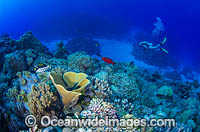 Scuba Diver on Coral reef Photo - Bob Halstead