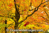 Autumn Trees Armidale Photo - Gary Bell