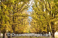 Country track lined with deciduous trees stock photo