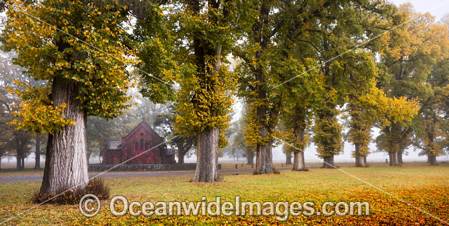 Autumn at Gostwyck Chapel surrounded by Elm trees, near Uralla, New England Tableland, New South Wales, Australia. Photo - Gary Bell