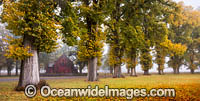 Autumn Trees Gostwyck Chapel Photo - Gary Bell