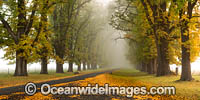 Country Road lined with Autumn Trees Photo - Gary Bell