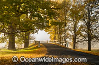 Country Road lined with Autumn Trees stock photo