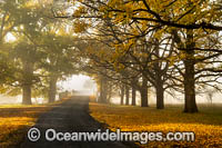 Uralla Autumn Trees Photo - Gary Bell