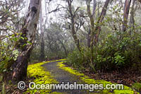 Track in rainforest Photo - Gary Bell