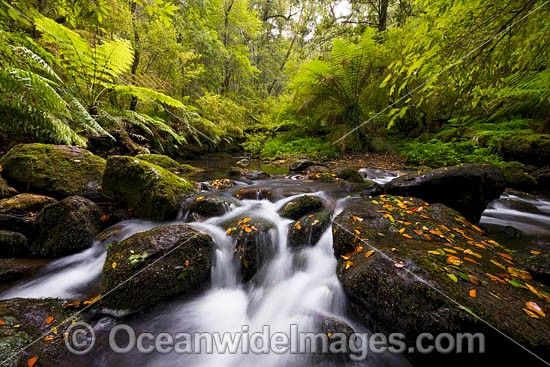 Rainforest Cascade on Five Day Creek. New England World Heritage National Park, New South Wales, Australia. This rainforest is on the World Heritage List in recognition of its outstanding universal value. Photo - Gary Bell