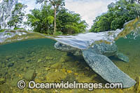 Leatherback Turtle Photo - Michael Patrick O'Neill