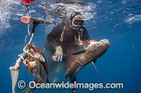 Spearfisherman with Cobia photo