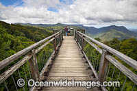 Dorrigo Rainforest Boardwalk Photo - Gary Bell
