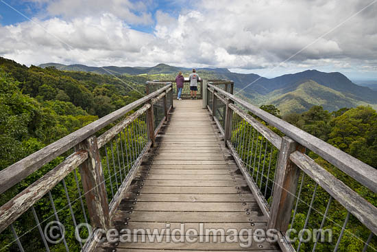 Elevated Rainforest Boardwalk, Dorrigo World Heritage National Park. Dorrigo, New South Wales, Australia. Photo - Gary Bell