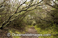 Mornington Peninsula Woodland Photo - Gary Bell