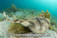 Southern Fiddler Ray Photo - Gary Bell