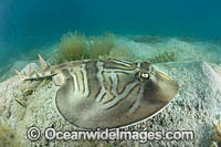 Southern Fiddler Ray Victoria Photo - Gary Bell