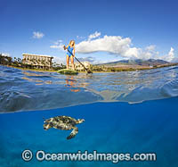 Girl on Paddleboard with Green Sea Turtles photo