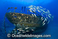 Artificial Reef Hawaii Photo - David Fleetham