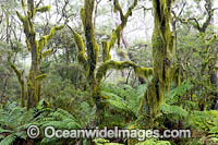Gondwana Rainforest moss Photo - Gary Bell