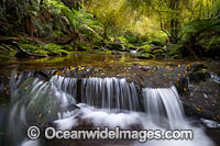 Rainforest Cascade Photo - Gary Bell