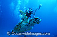Scuba Diver photographing Loggerhead Turtle Photo - Gary Bell
