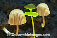Rainforest Fungi Photo - Gary Bell