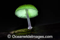 Bioluminescent Fungi Photo - Gary Bell
