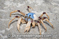 Soldier Crabs Photo - Gary Bell
