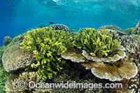 Reefscape Corals PNG Photo - Gary Bell