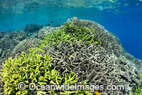 Reef scene PNG Photo - Gary Bell
