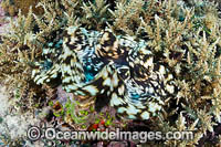 Giant clam Photo - Gary Bell
