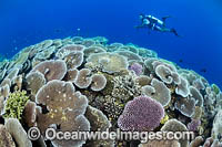 Diver and Corals Photo - Gary Bell