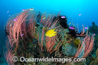 Coral Reef Scene Photo - Gary Bell
