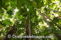 Fan Palm Forest Photo - Gary Bell