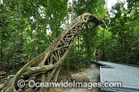 Strangler Fig Tree Photo - Gary Bell