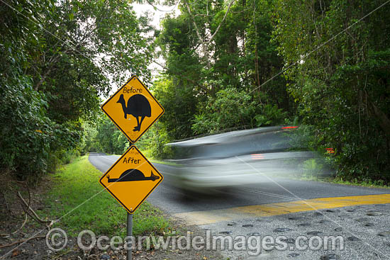 Cassowary Warning road sign, Cape Tribulation, Far North Queensland, Australia. Photo - Gary Bell