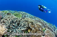 Coral Reef Scene PNG Photo - Gary Bell