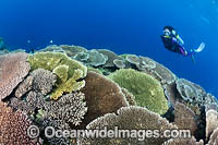 Diver and Reef Scene Photo - Gary Bell
