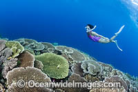 Snorkel Diver and Reef Photo - Gary Bell