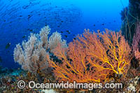 Tropical Reef Scene Photo - Gary Bell