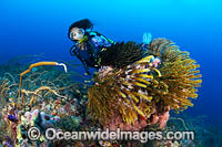 Tropical Reef and Diver Photo - Gary Bell