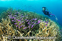 Diver Coral and Fish Photo - Gary Bell