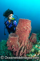 Diver and Giant Barrel Sponge Photo - Gary Bell